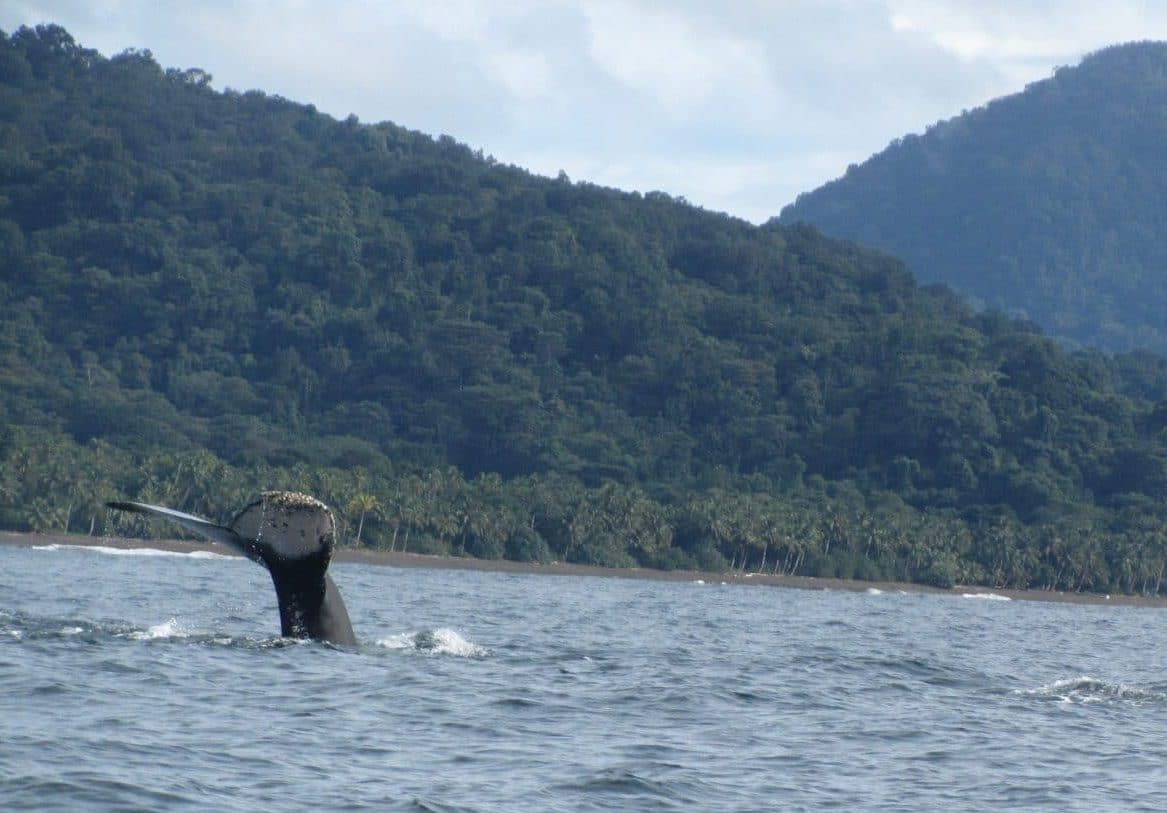 Whale Watching on Deserted Beaches in Nuquí – Travel Guide to Nuquí, Colombia (2019 update)