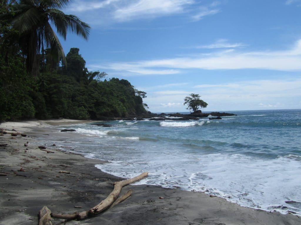 Waves washing ashore with palm trees in the background, one of the sites you see when you visit Nuqui, Colombia.