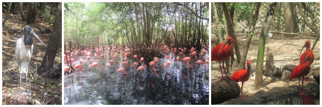 Photo collage showing photos of coastal birds at the National Aviary of Colombia