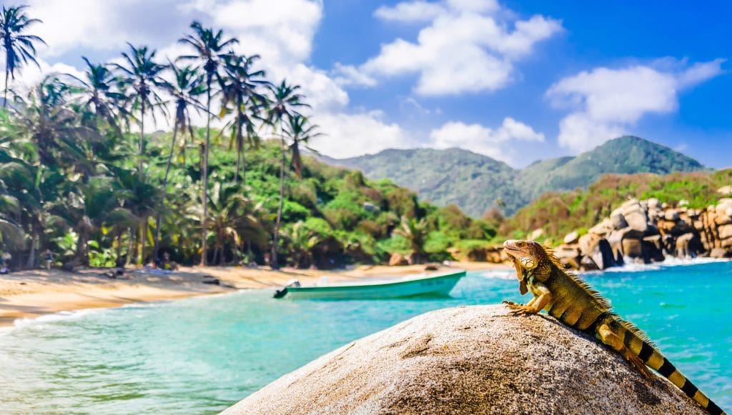Photo of an iguana on a rock with a boat in the water behind it at Tayrona Park Colombia.