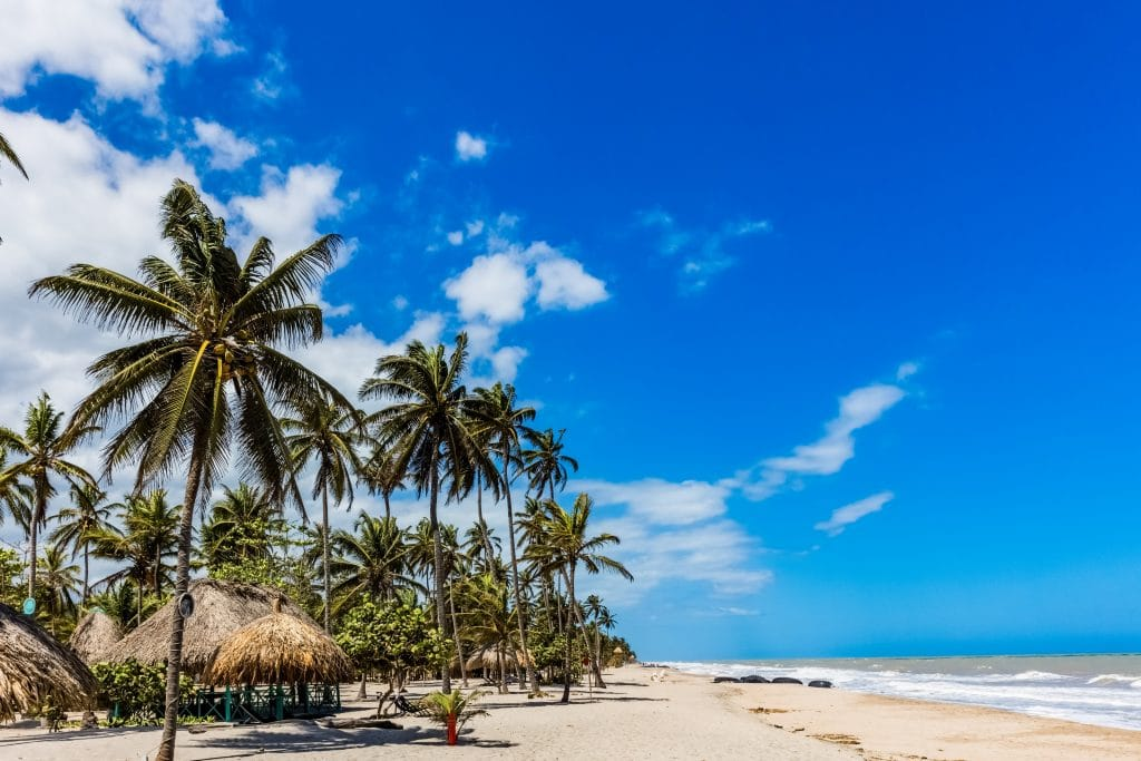 Photo of palm trees on the beach in Palomino, Colombia.