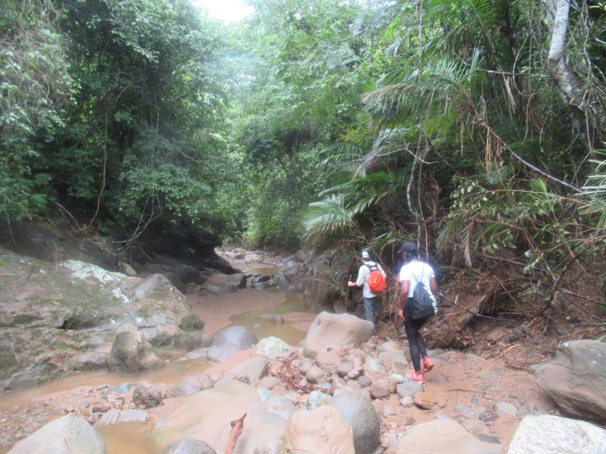 Following the Jaguar's Footprint in the Montes de Maria with Taroa Adventures