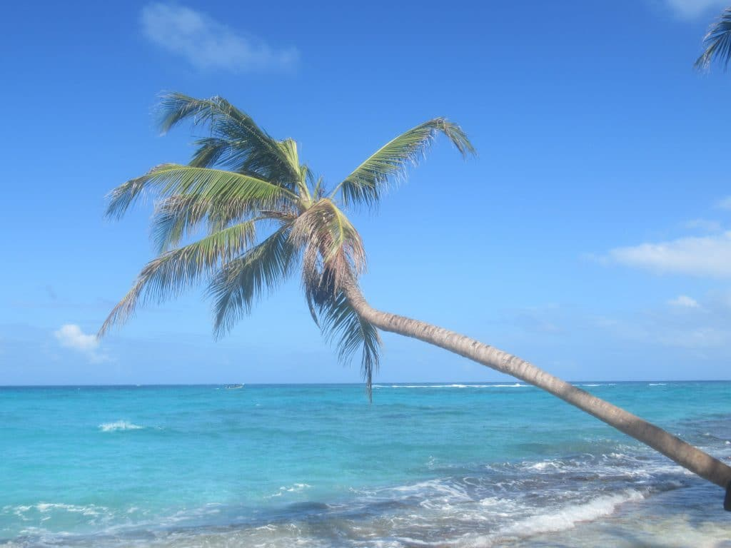 Photo of a palm tree overhanging the Caribbean in Isla San Andres, Colombia.