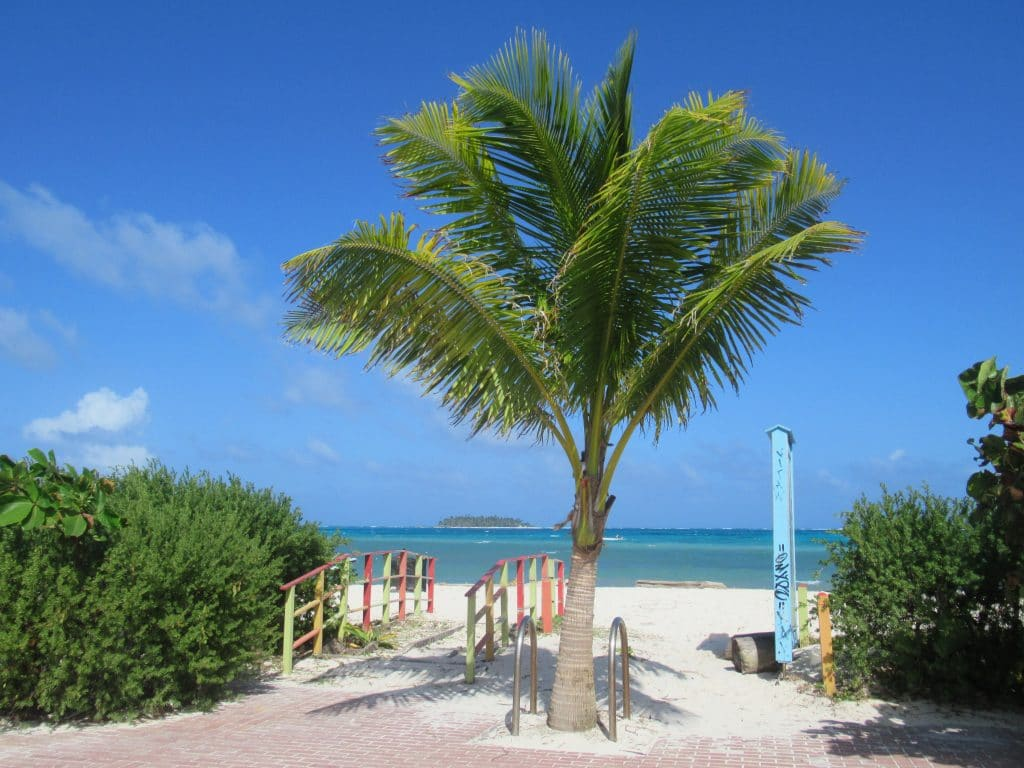 Photo of a palm tree next to a little walkway out to the beach on the island of San Andres, Colombia.