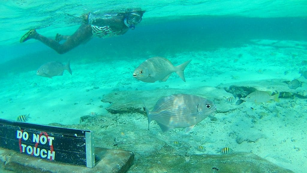 Photo of some fish with a girl snorkeling in the background at the Acuario in San Andres