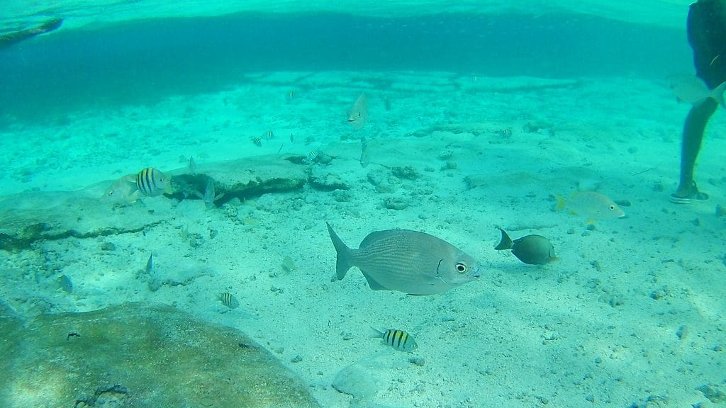 Photo of some fish swimming at the San Andres Acuario.