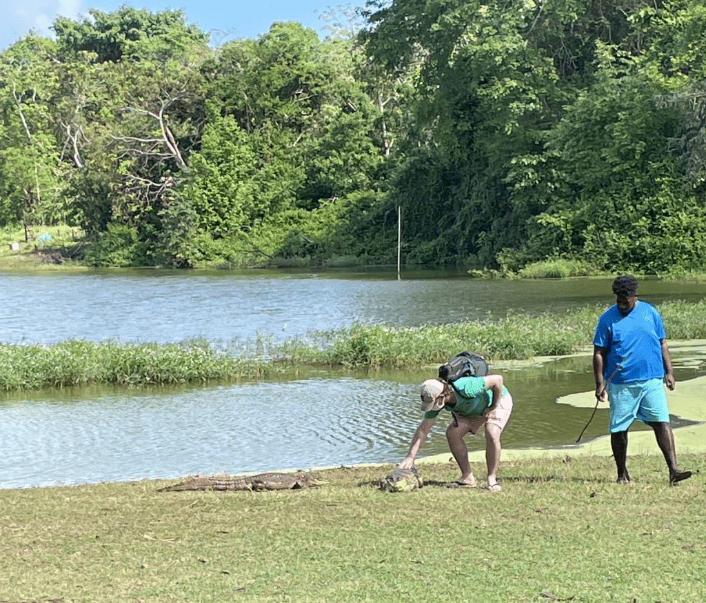Photo of a guy petting a caiman alligator with a guide next to him in front of the Big Pond, one of the lesser known things to so on the island of San Andres.